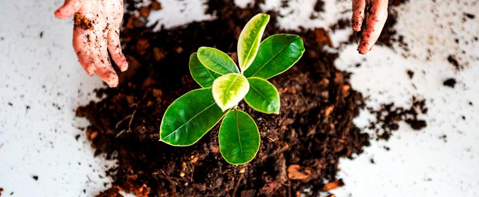 La moda de plantar árboles: ¿una estrategia siempre positiva?