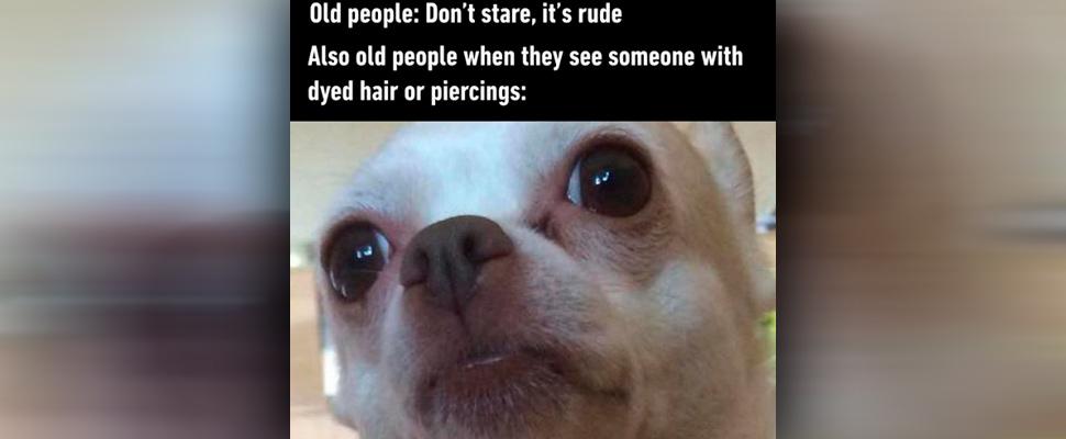 Friday Dog Memes