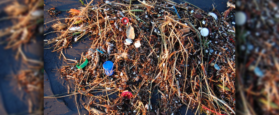 Plastic pollution can harm both the micro and macro-organisms living in our oceans.