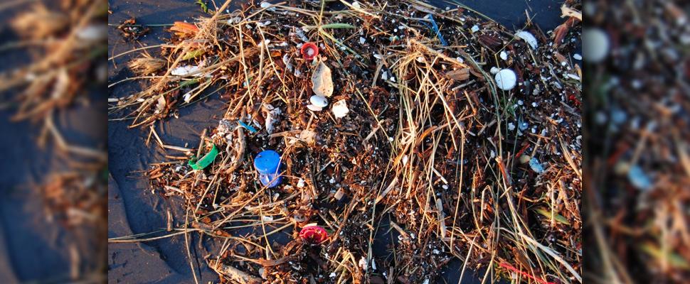 La contaminación plástica puede dañar tanto a los micro y macro organismos que viven en nuestros océanos.