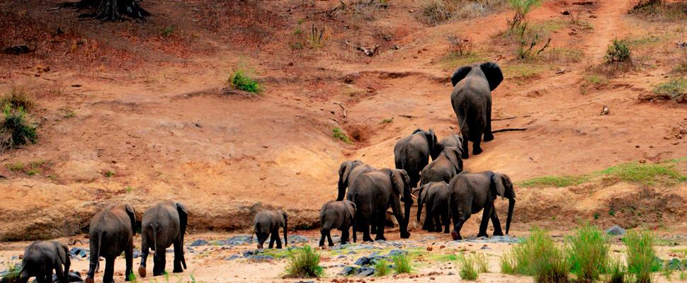 Herd of elephants in a mountain.