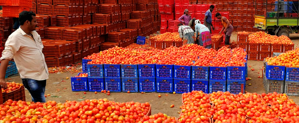 Workers packing tomatoes at the market of Madanapalle in India.