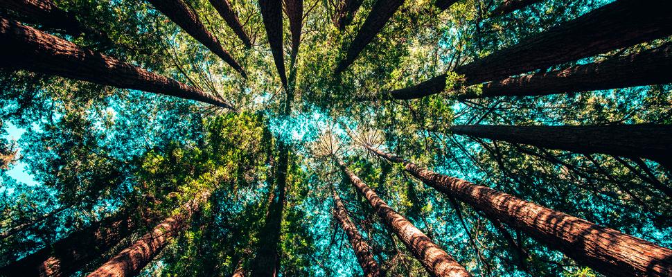 El bosque, mucho más que árboles