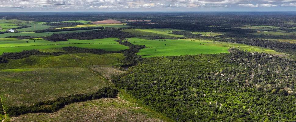 El crecimiento del bosque amazónico es mucho más lento de lo que se pensaba