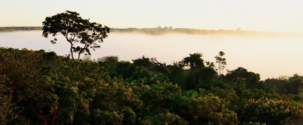 Colombia plantaría 180 millones de árboles