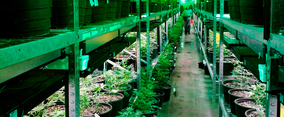 How to get a license of manufacture or cultivation of cannabis in Colombia?