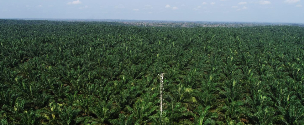 Drone view of oil palm plantation with flux tower to measure greenhouse gases.