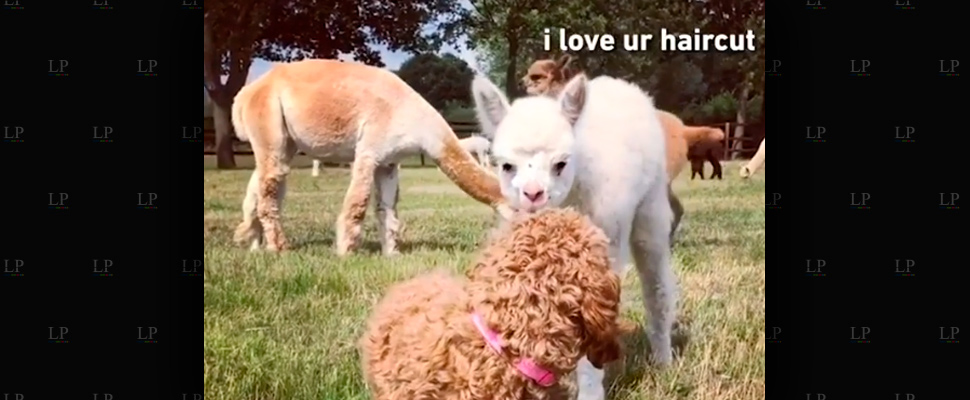 Laugh with these funny animal videos