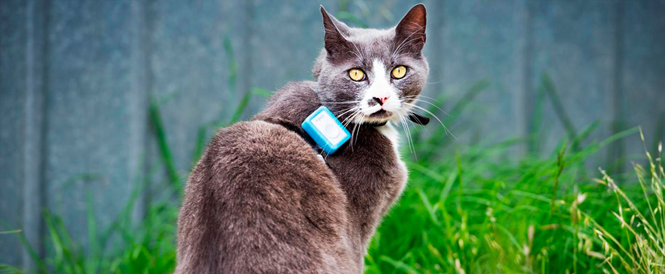 Los terribles efectos de los gatos en la vida silvestre