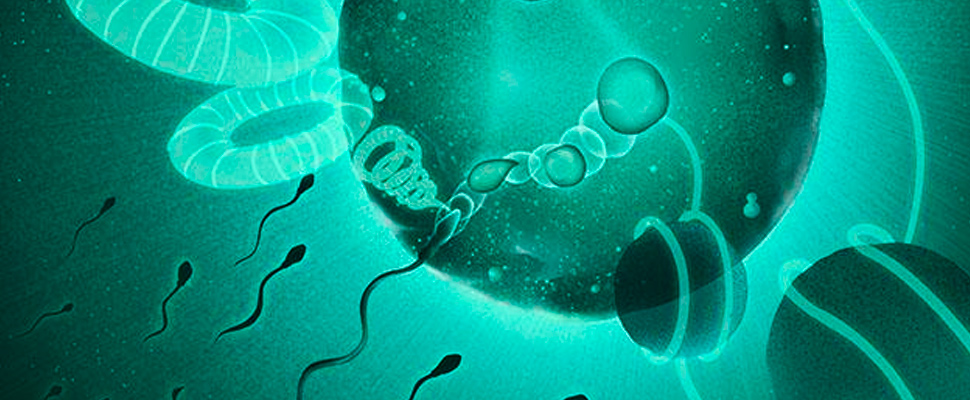 How sperm unpack dad's genome so it merges with mom's