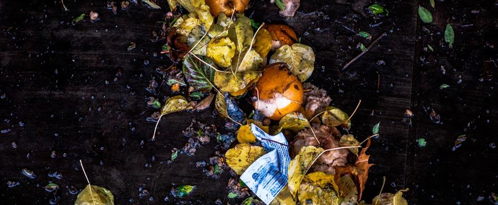 Hojas y frutas con basura en una zona natural