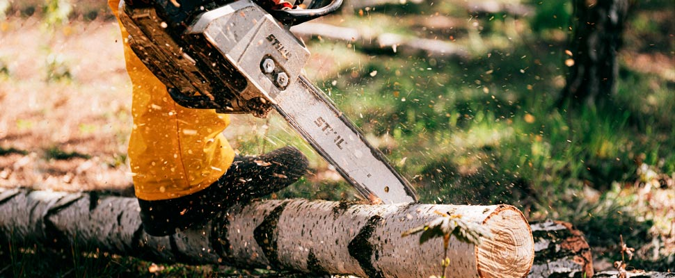 Persona usando una motosierra cortando un árbol.