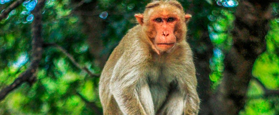 mono gris en poste de hormigón.