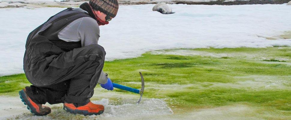 Green Snow in Antarctica