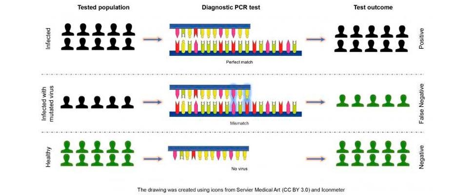Ilustración de los resultados de las pruebas de COVID-19