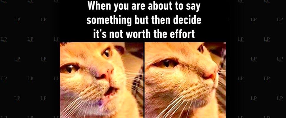 Middle Week Memes
