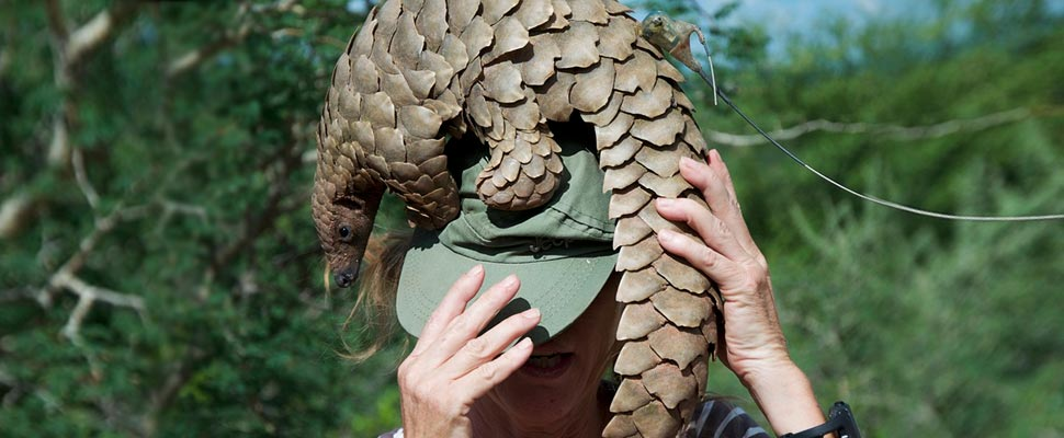 Pangolin on the head of a woman