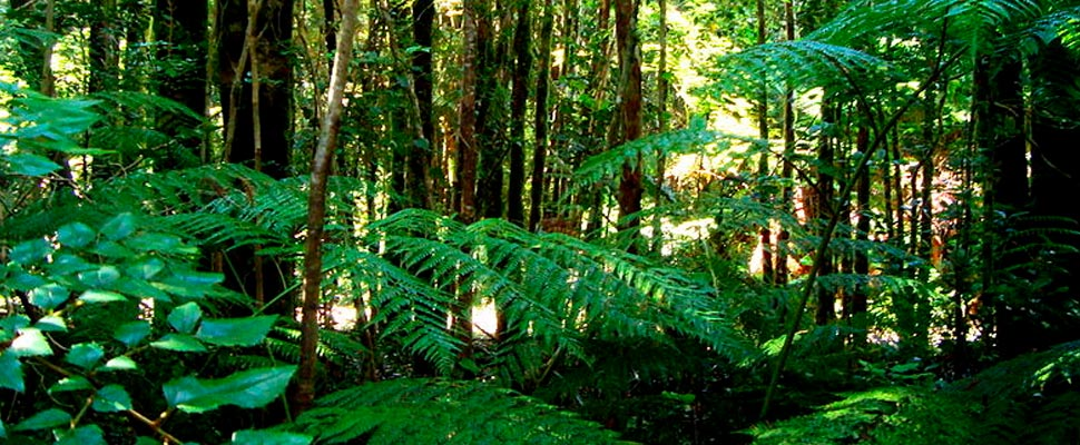 Valdivian forest: a biogeographic island that was saved from the glaciations