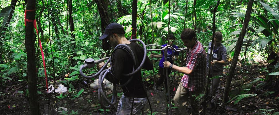 Panama forest fieldwork