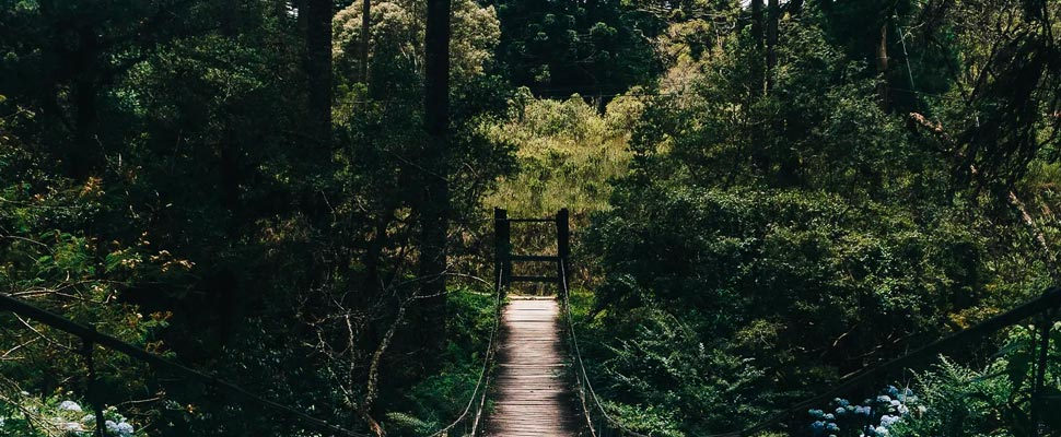 Wooden suspension bridge in the middle of a forest
