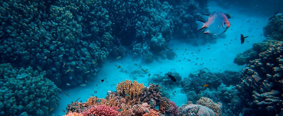 Photo under the ocean