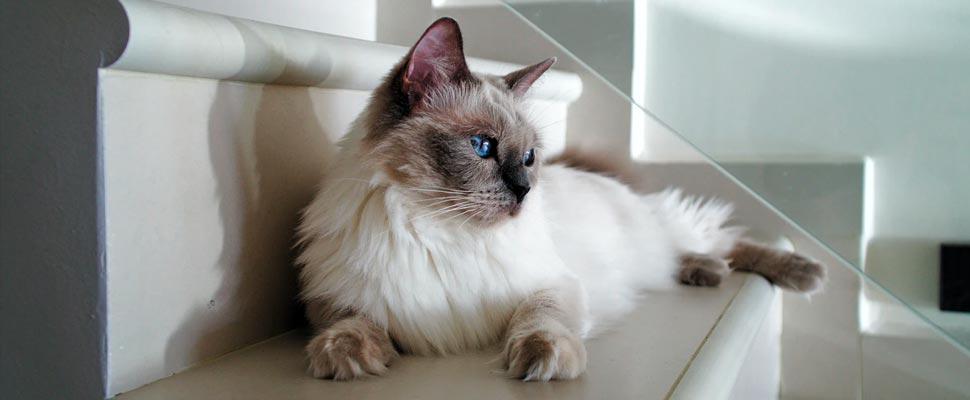 Los gatos podrían ser positivos para COVID-19