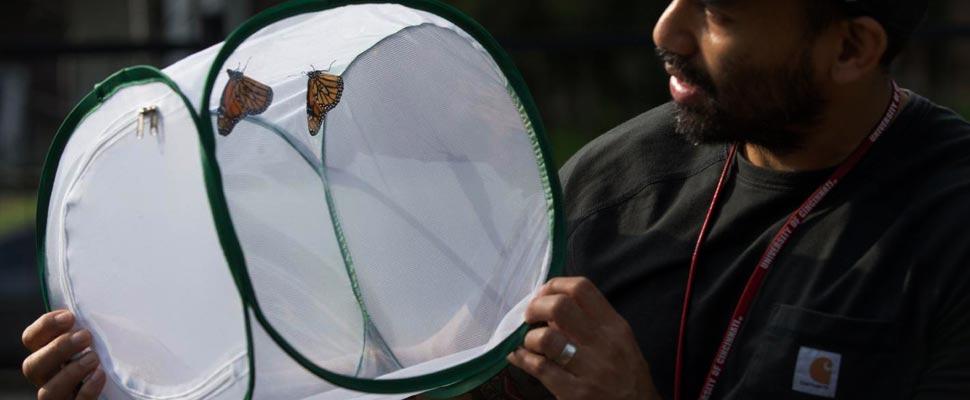 Man holding a silk moth