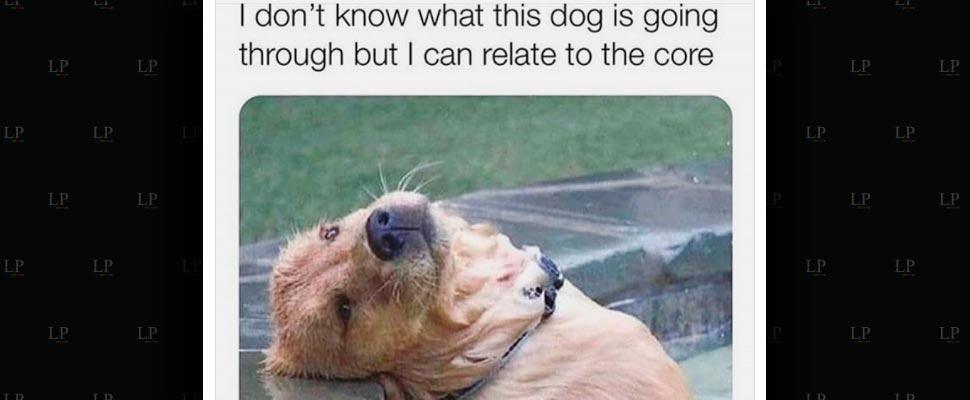 Best Doggy Memes