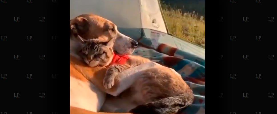Los videos de animales más tiernos