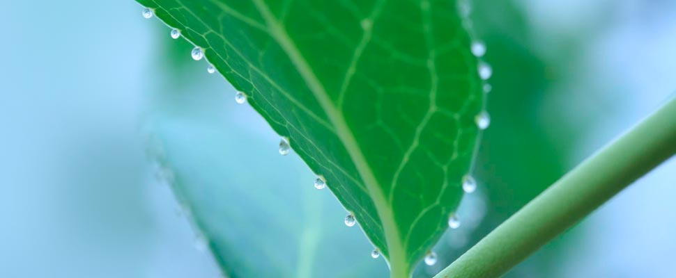 Plant Droplets
