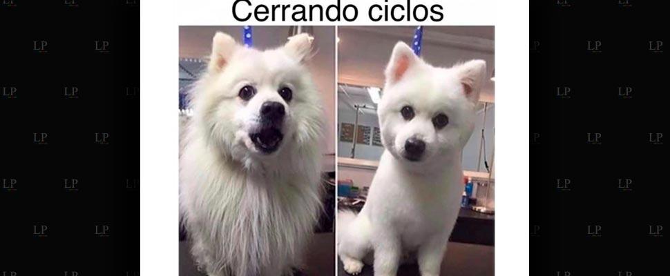 Ríete este viernes con estos memes de perritos