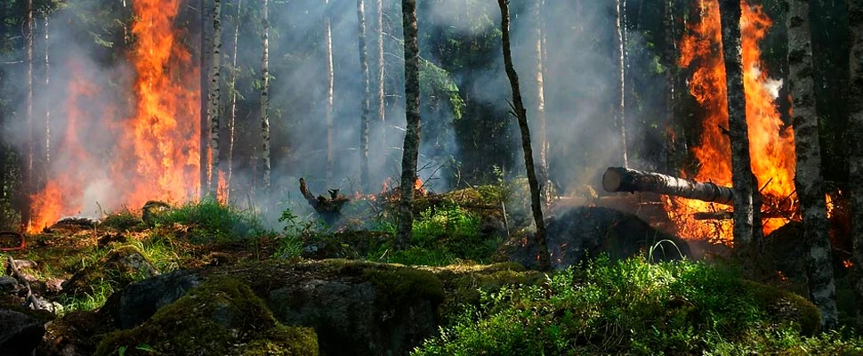 Forest fires: a growing threat to the world's forests