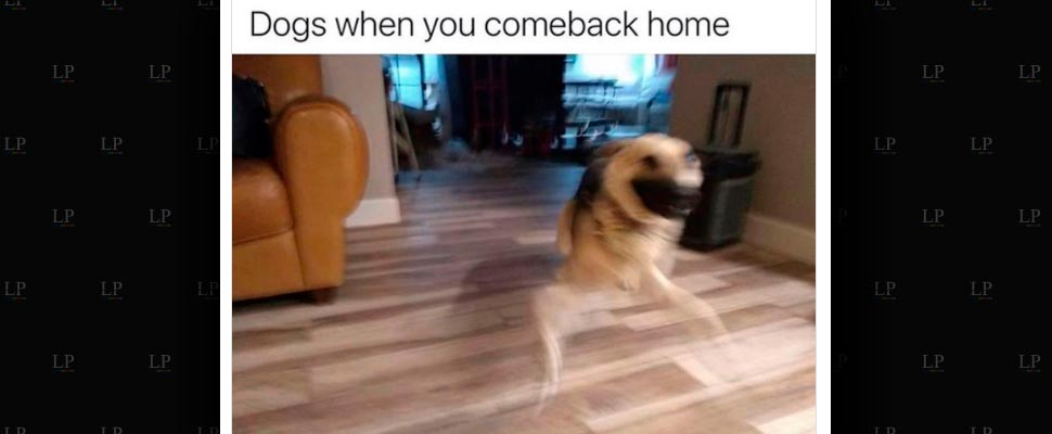 Start the week with doggy memes