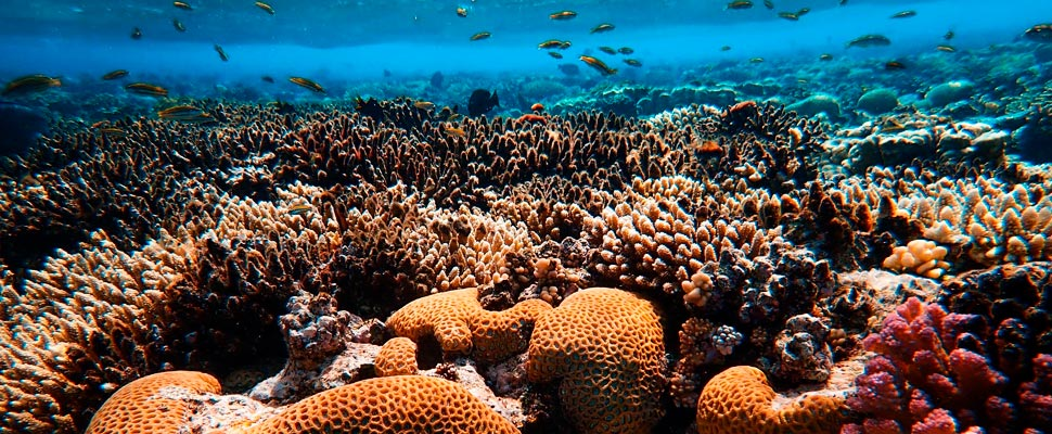 Brown coral reef in sea