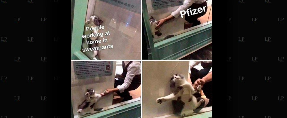 The best memes about Pfizer