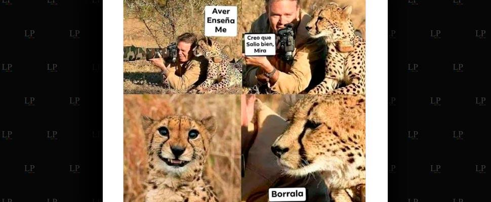 Los animales en los memes