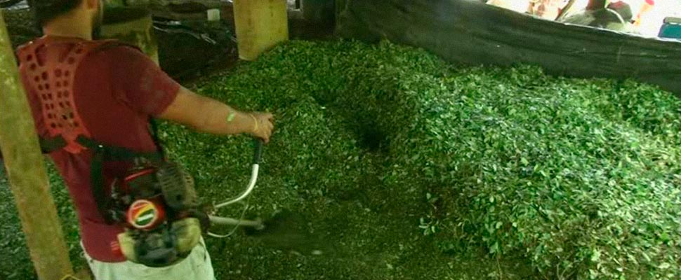 Colombia: ¿cómo se intenta regular la cocaína?