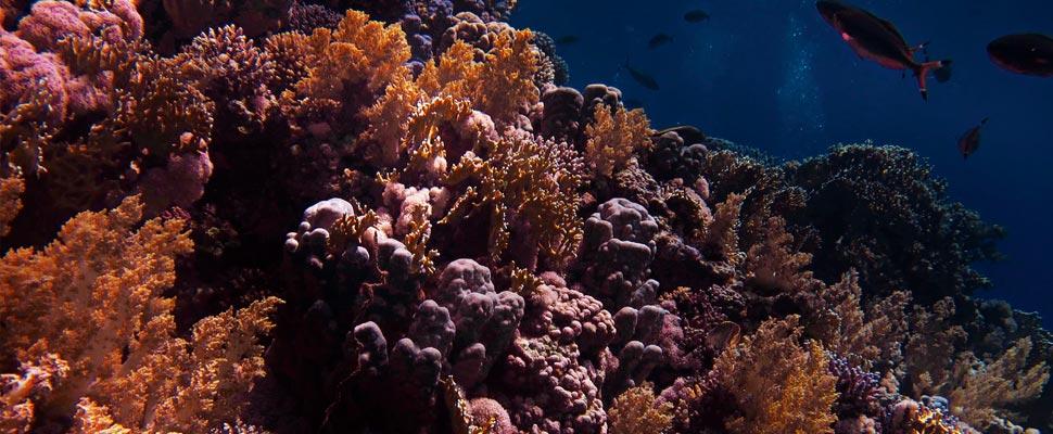 Los arrecifes de coral tienen el tiempo contado