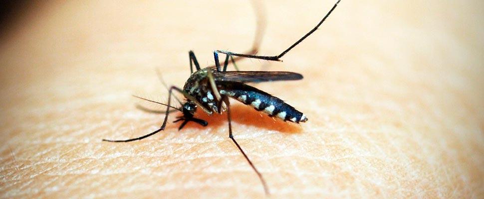 Conexión entre la transmisión de la malaria y el cambio climático y más noticias medioambientales