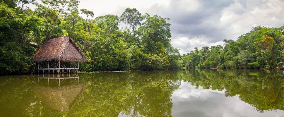 El Amazonas produce más contaminación que oxígeno y más noticias medioambientales