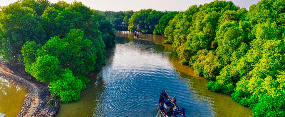 Boat touring a mangrove forest