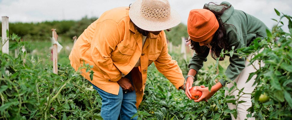 How Coronavirus Can Affect Farming