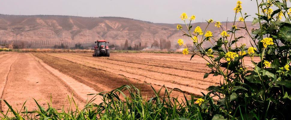 Estudio afirma que 64% de la tierra agricola está bajo amenaza de contaminación