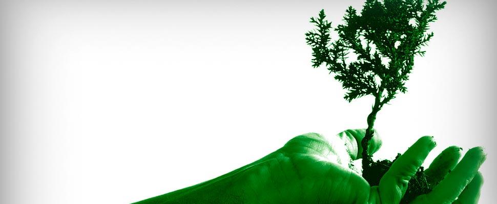 Mano sosteniendo un árbol