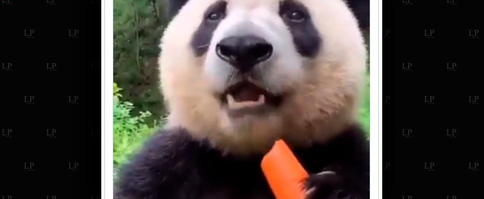 Los videos de animales que nos enternecieron esta semana