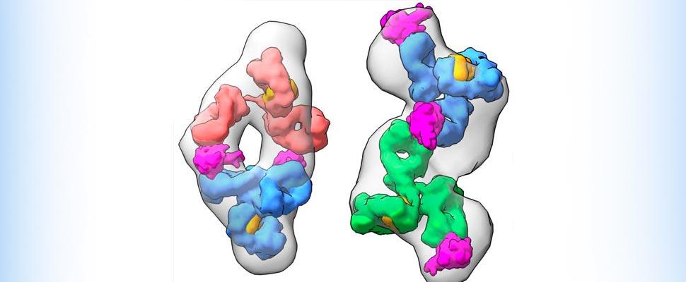 Anticuerpos COVID-19