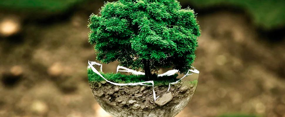 Figure of a tree within a transparent sphere