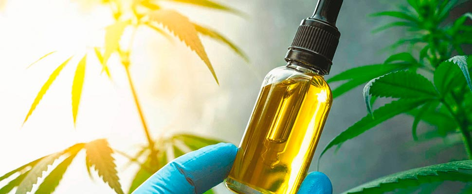 The Evolution Of Cannabis And CBD In South America