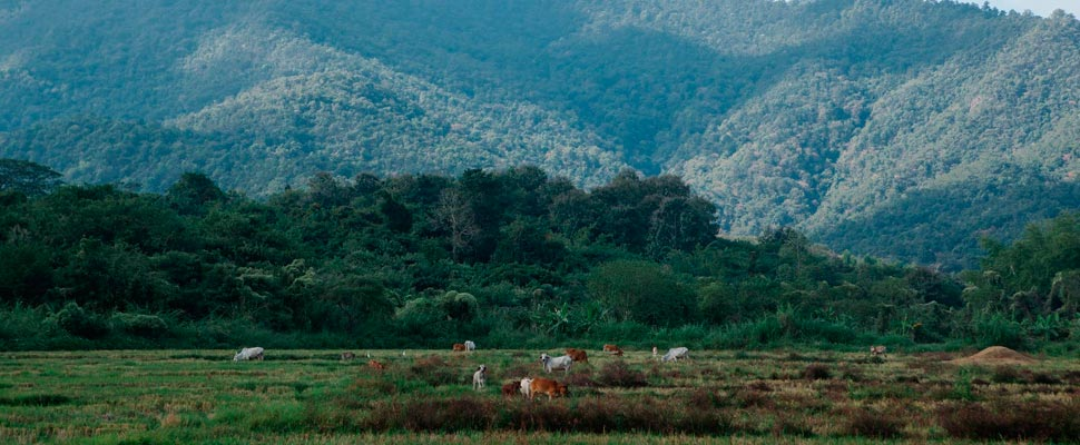 View of a landscape with animals