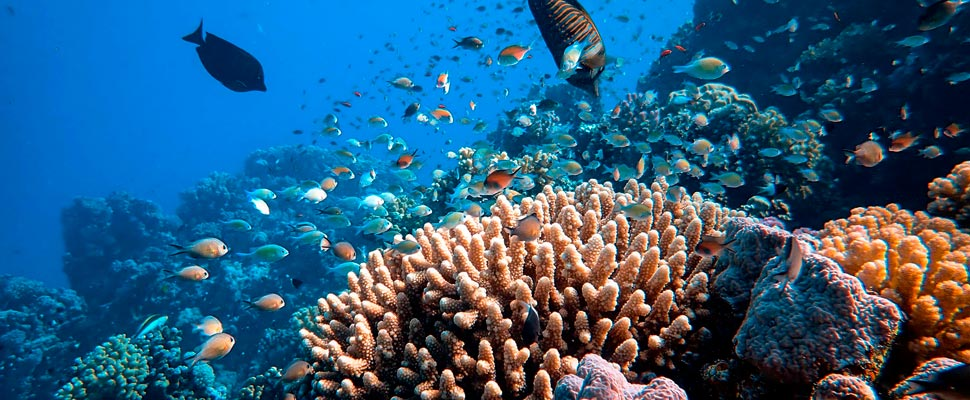 3 Initiatives That Are Saving the Coral Reefs Through Technology